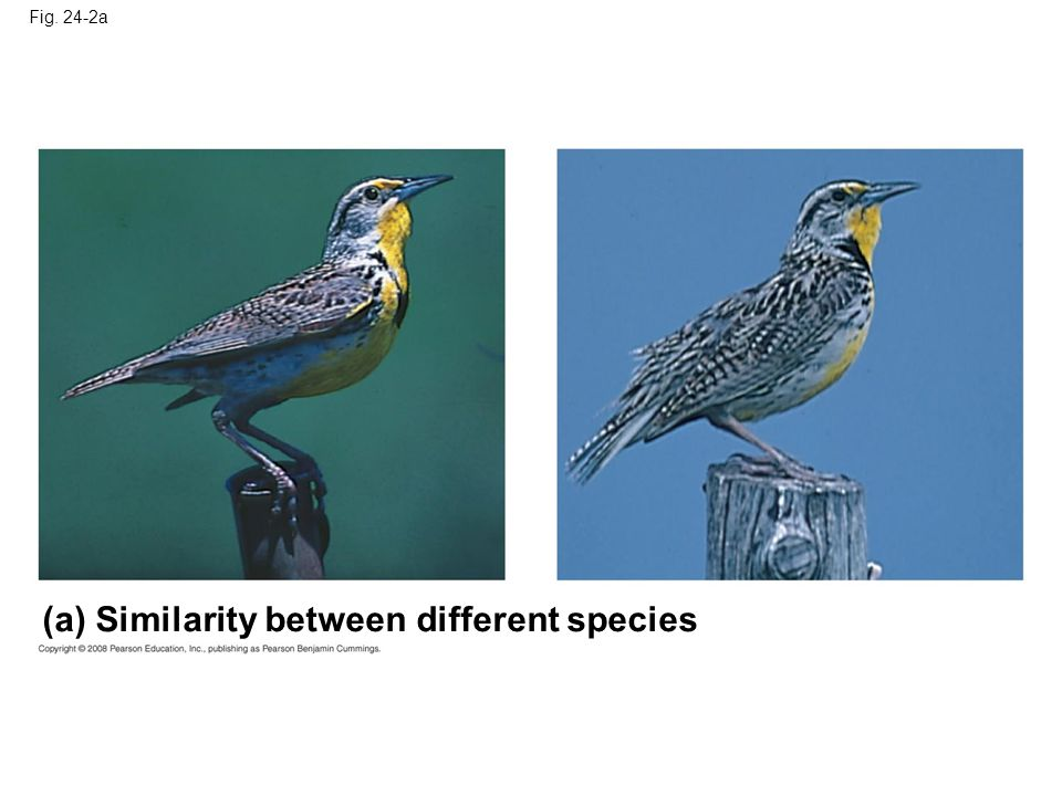 Fig. 24-2a (a) Similarity between different species