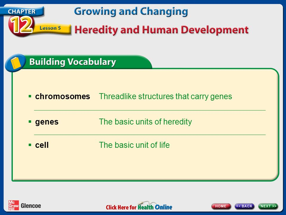  chromosomes Threadlike structures that carry genes The basic units of heredity  genes The basic unit of life  cell