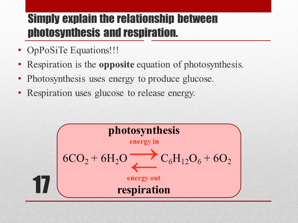 17 Simply explain the relationship between photosynthesis and respiration.