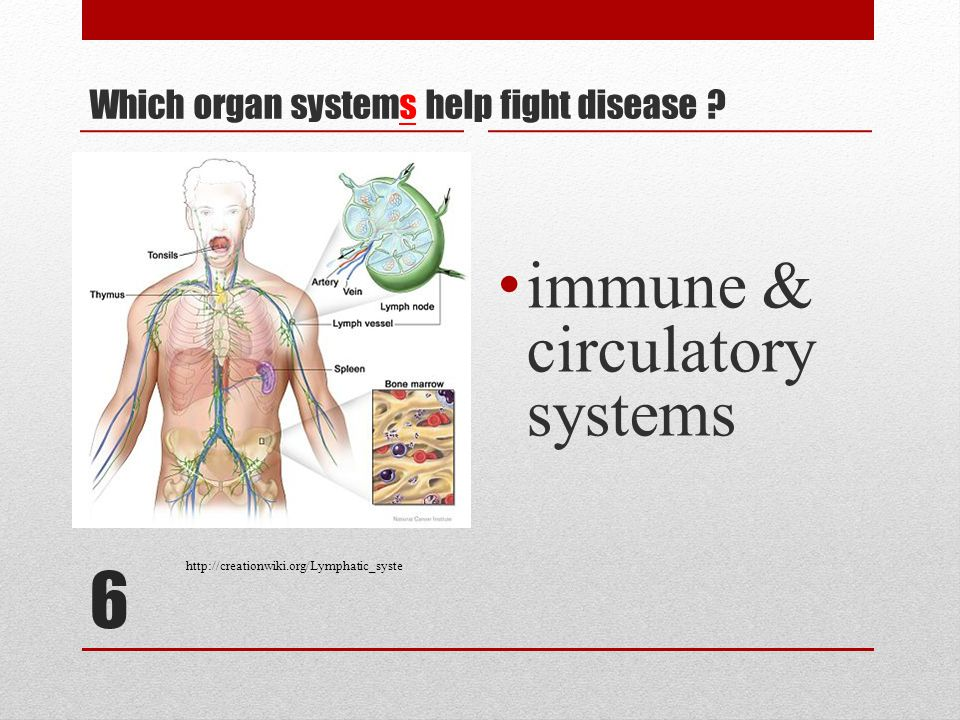 6 Which organ systems help fight disease .