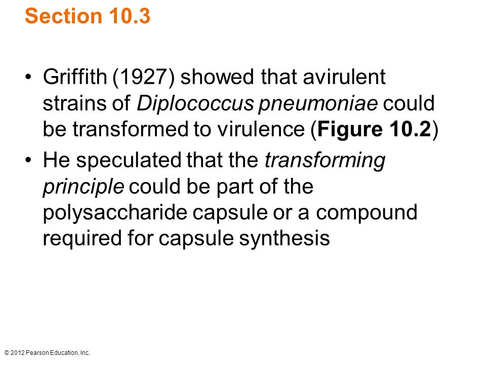 © 2012 Pearson Education, Inc. Section 10.3 Griffith (1927) showed that avirulent strains of Diplococcus pneumoniae could be transformed to virulence