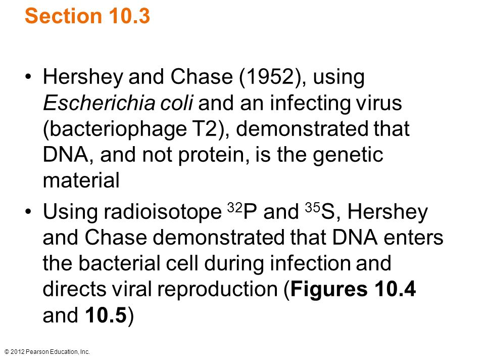 © 2012 Pearson Education, Inc. Section 10.3 Hershey and Chase (1952), using Escherichia coli and an infecting virus (bacteriophage T2), demonstrated t