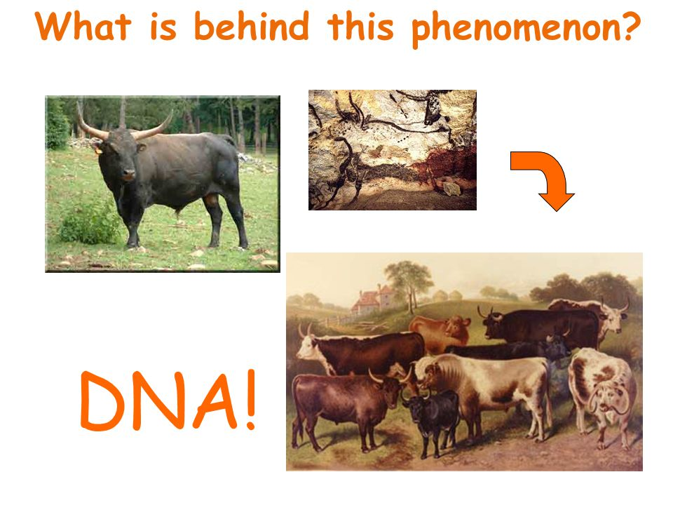 What is behind this phenomenon? DNA!