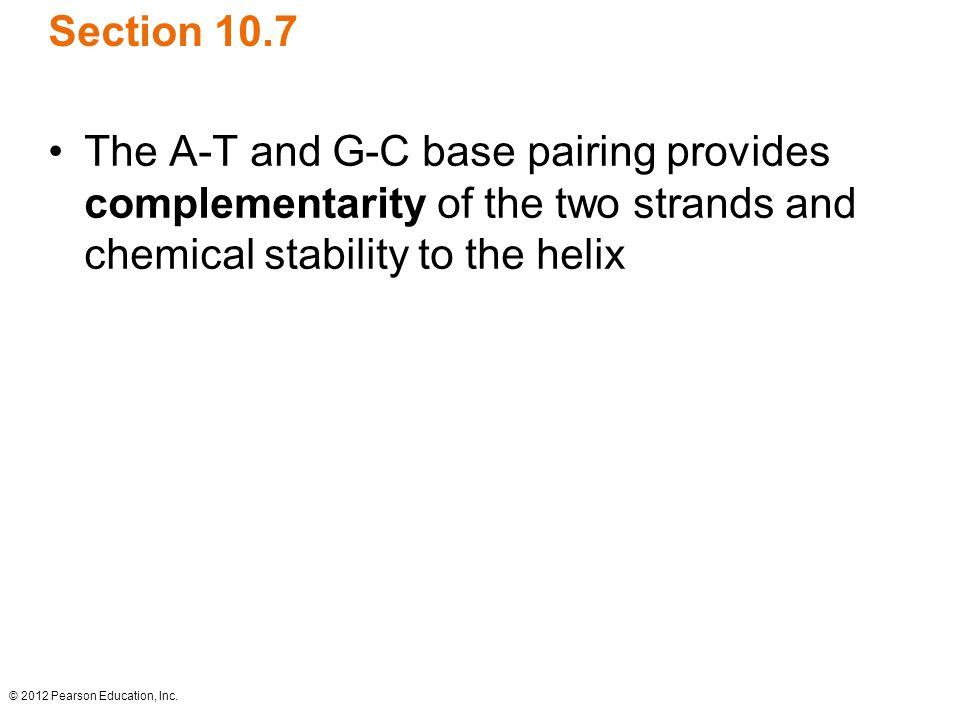 © 2012 Pearson Education, Inc. Section 10.7 The A-T and G-C base pairing provides complementarity of the two strands and chemical stability to the hel