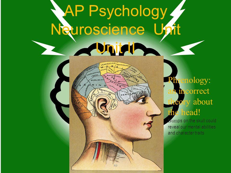 Occipital Lobe ap