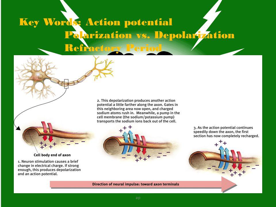 Figure 2.16 The brainstem and thalamus Survival functions… ap