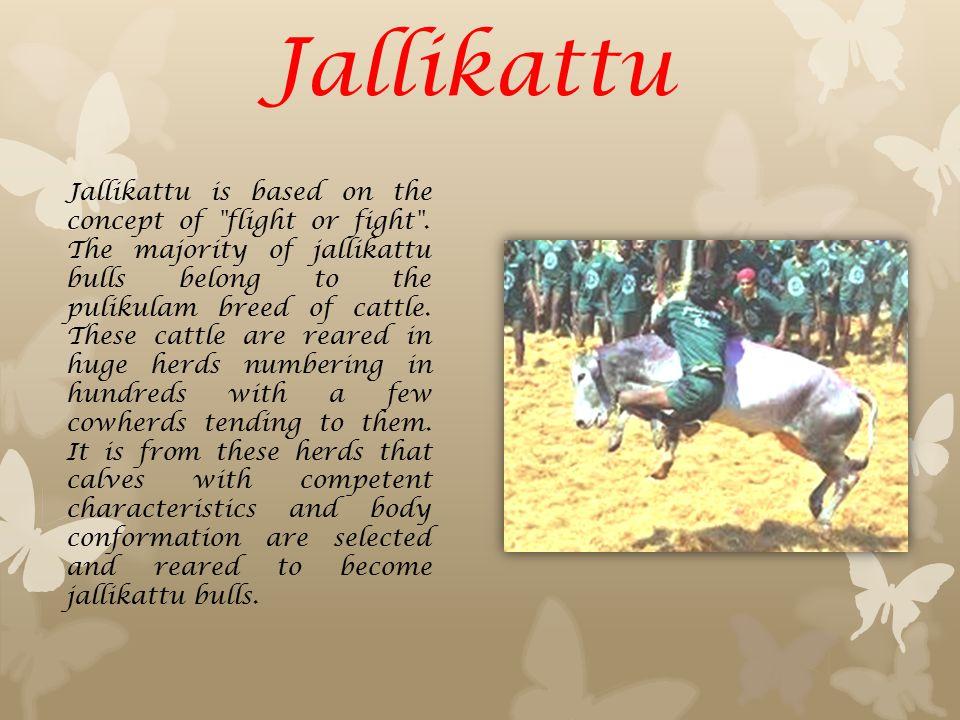 Jallikattu Jallikattu is based on the concept of