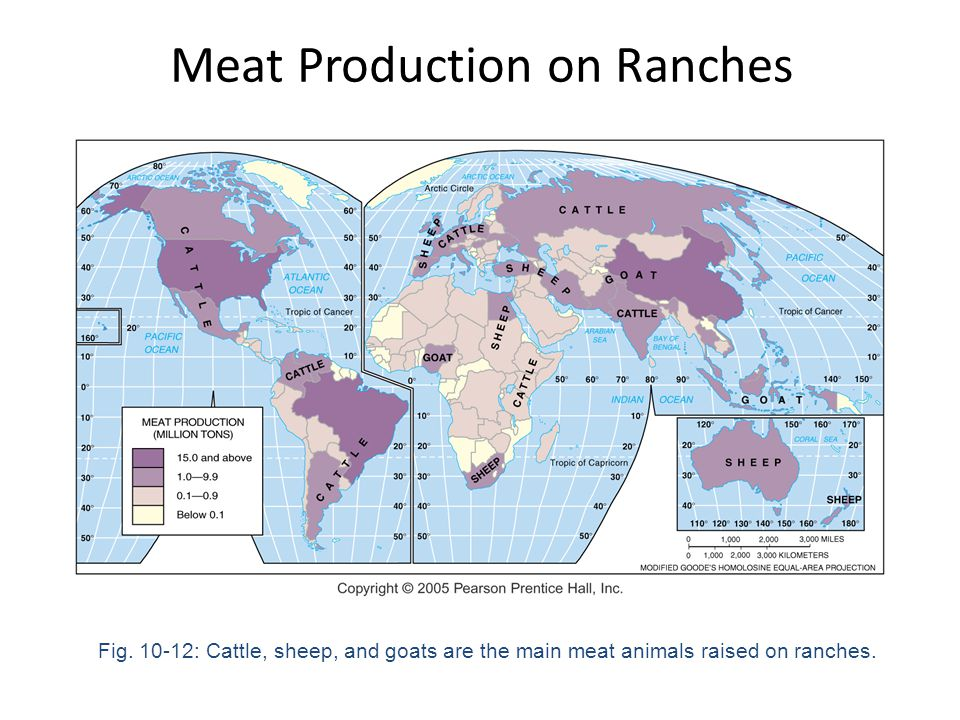 Meat Production on Ranches Fig. 10-12: Cattle, sheep, and goats are the main meat animals raised on ranches.