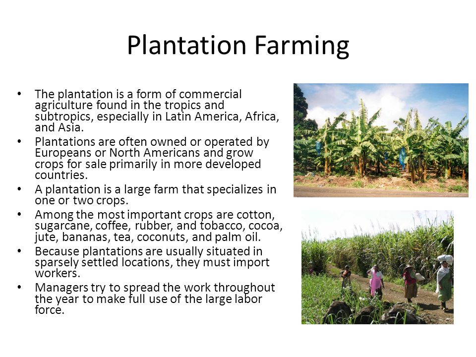 Plantation Farming The plantation is a form of commercial agriculture found in the tropics and subtropics, especially in Latin America, Africa, and As