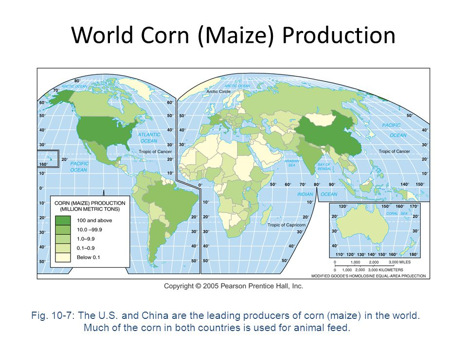 World Corn (Maize) Production Fig. 10-7: The U.S. and China are the leading producers of corn (maize) in the world. Much of the corn in both countries
