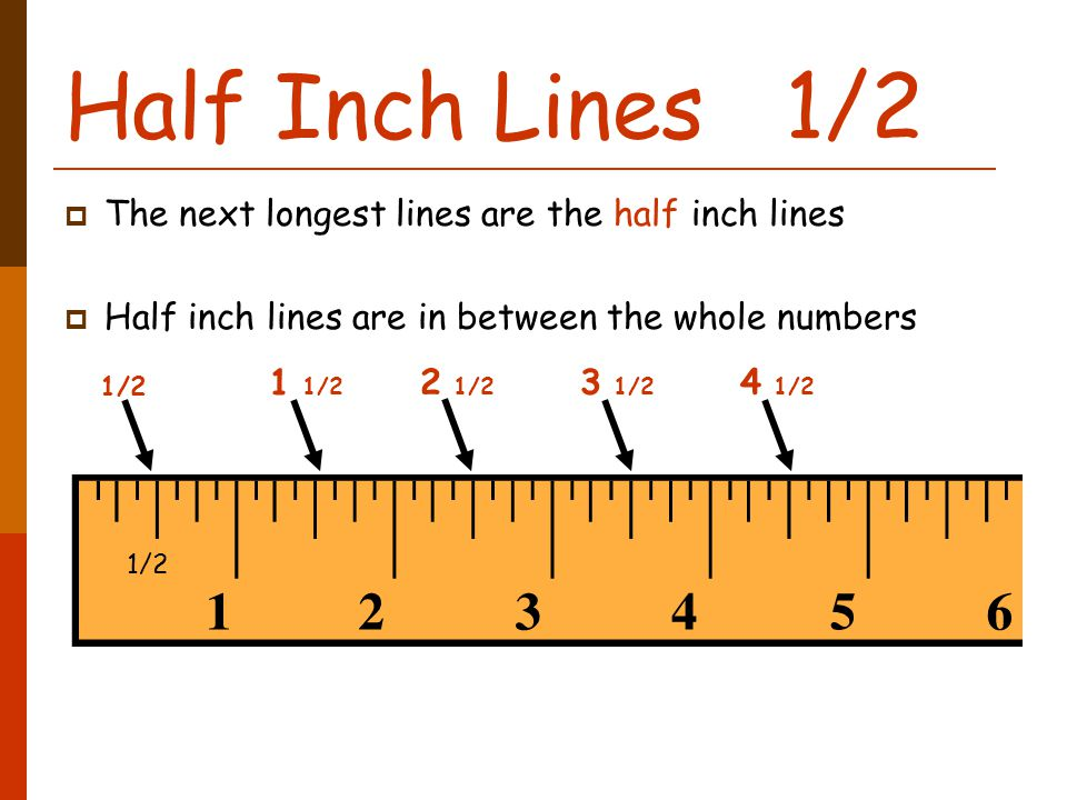 Half Inch Lines 1/2  The next longest lines are the half inch lines  Half inch lines are in between the whole numbers 1/2 1 1/2 2 1/2 3 1/2 4 1/2