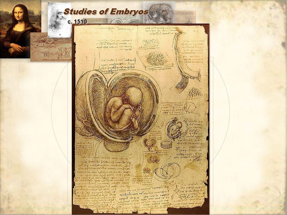 Studies of Embryos c. 1510