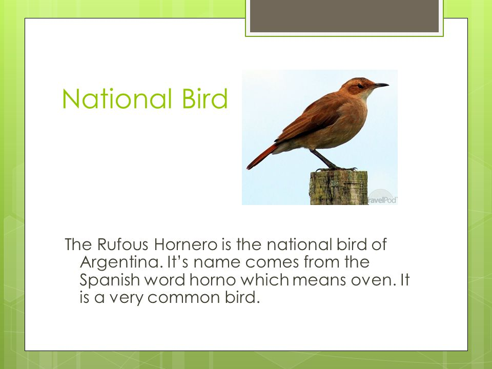 National Bird The Rufous Hornero is the national bird of Argentina.