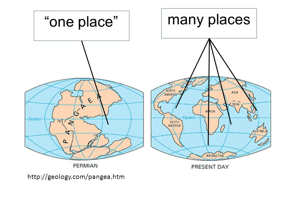 many places http://geology.com/pangea.htm one place