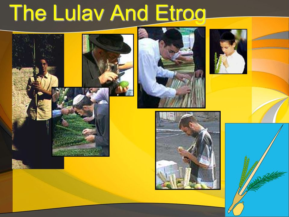 The Lulav And Etrog The Lulav And Etrog