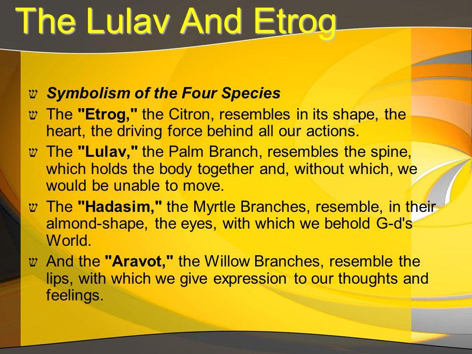 ש Symbolism of the Four Species ש The Etrog, the Citron, resembles in its shape, the heart, the driving force behind all our actions.