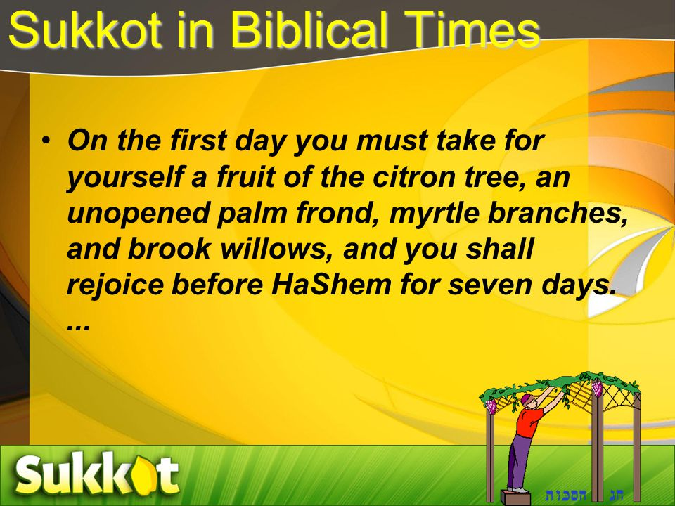 Sukkot in Biblical Times On the first day you must take for yourself a fruit of the citron tree, an unopened palm frond, myrtle branches, and brook willows, and you shall rejoice before HaShem for seven days....