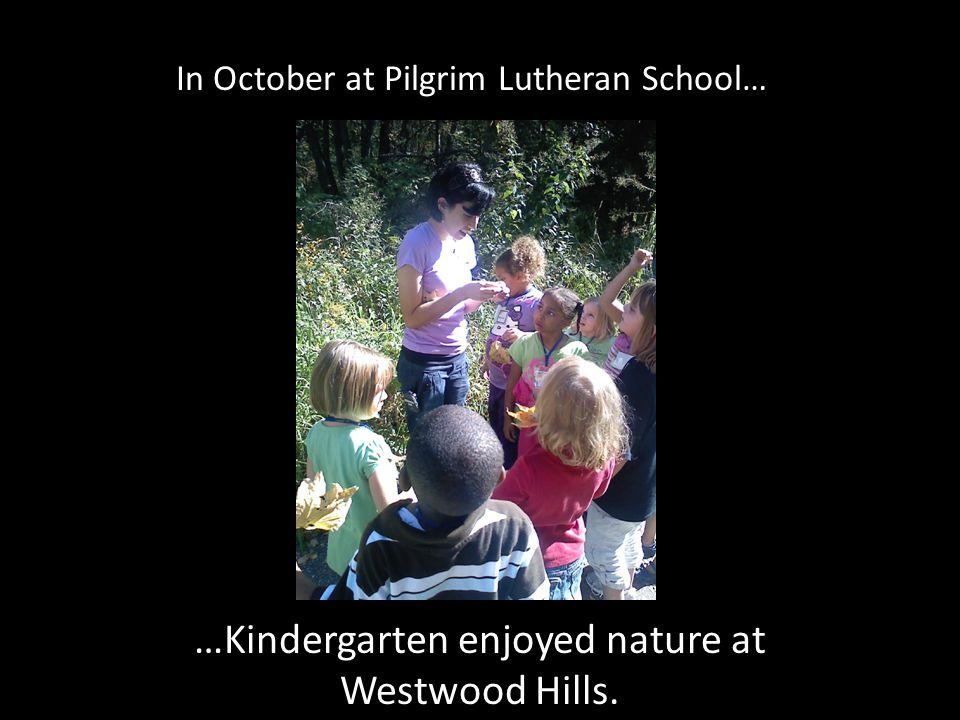 In October at Pilgrim Lutheran School… …Kindergarten enjoyed nature at Westwood Hills.