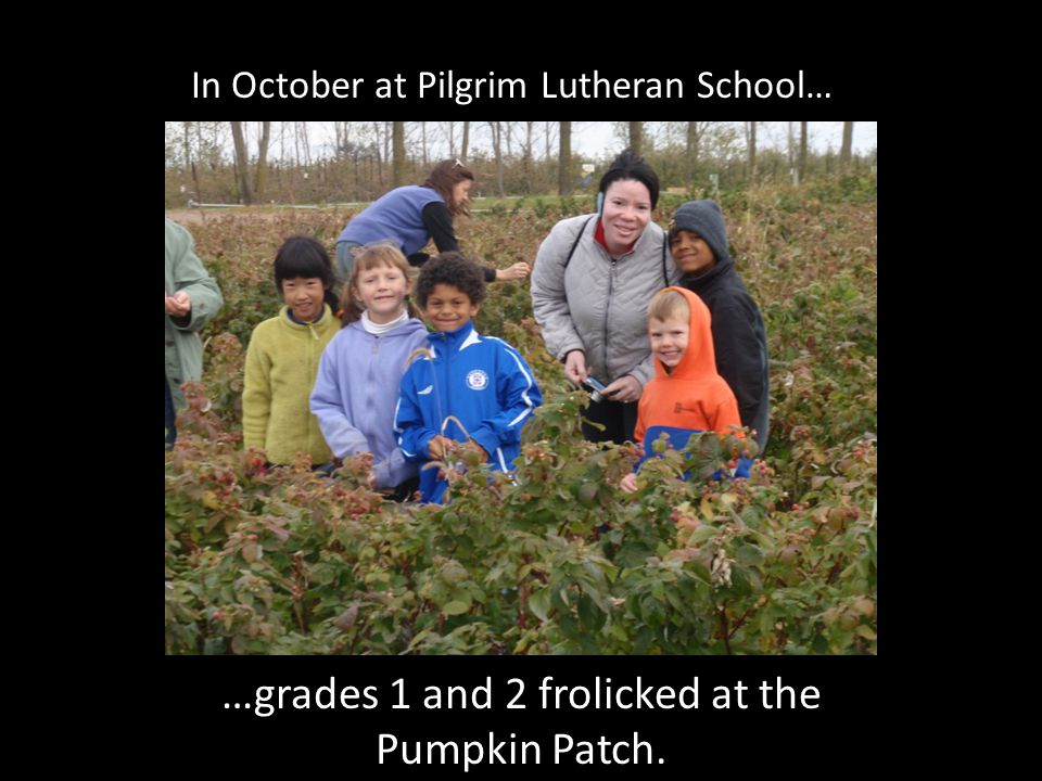 In October at Pilgrim Lutheran School… …grades 1 and 2 frolicked at the Pumpkin Patch.