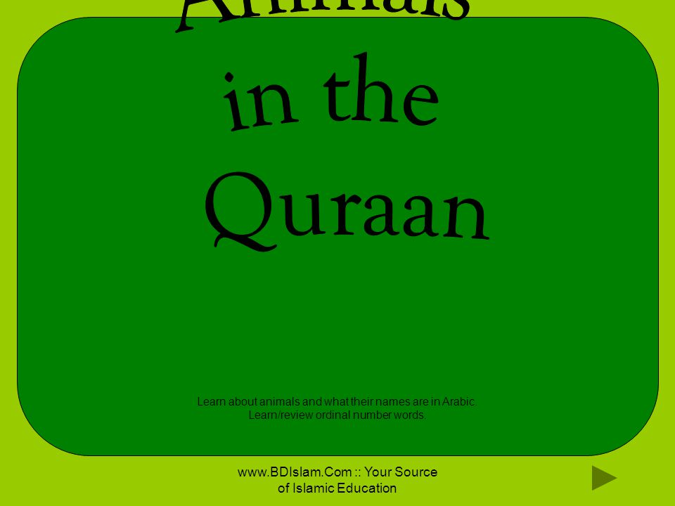 If animals in the Quraan were in a zoo, what would we see?