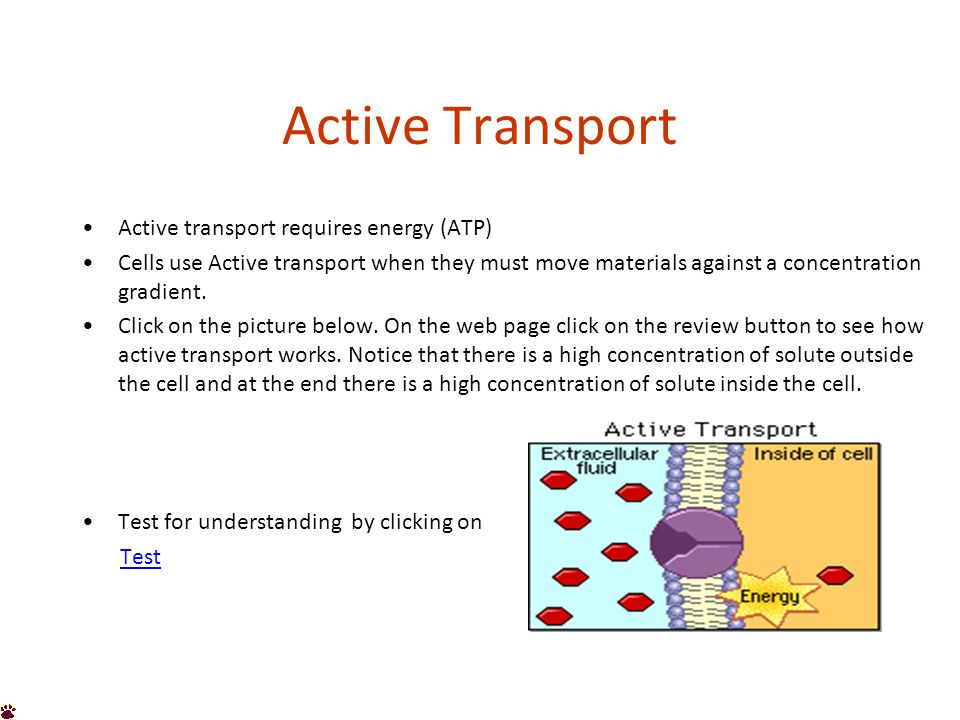 Active Transport Active transport requires energy (ATP) Cells use Active transport when they must move materials against a concentration gradient.
