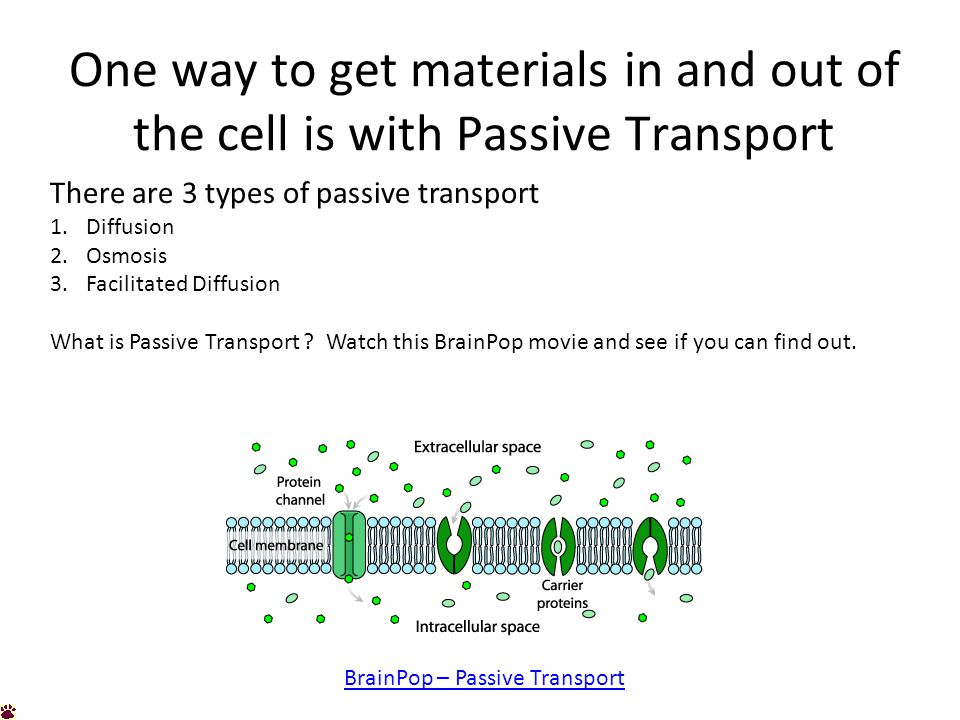 One way to get materials in and out of the cell is with Passive Transport There are 3 types of passive transport 1.Diffusion 2.Osmosis 3.Facilitated Diffusion What is Passive Transport .