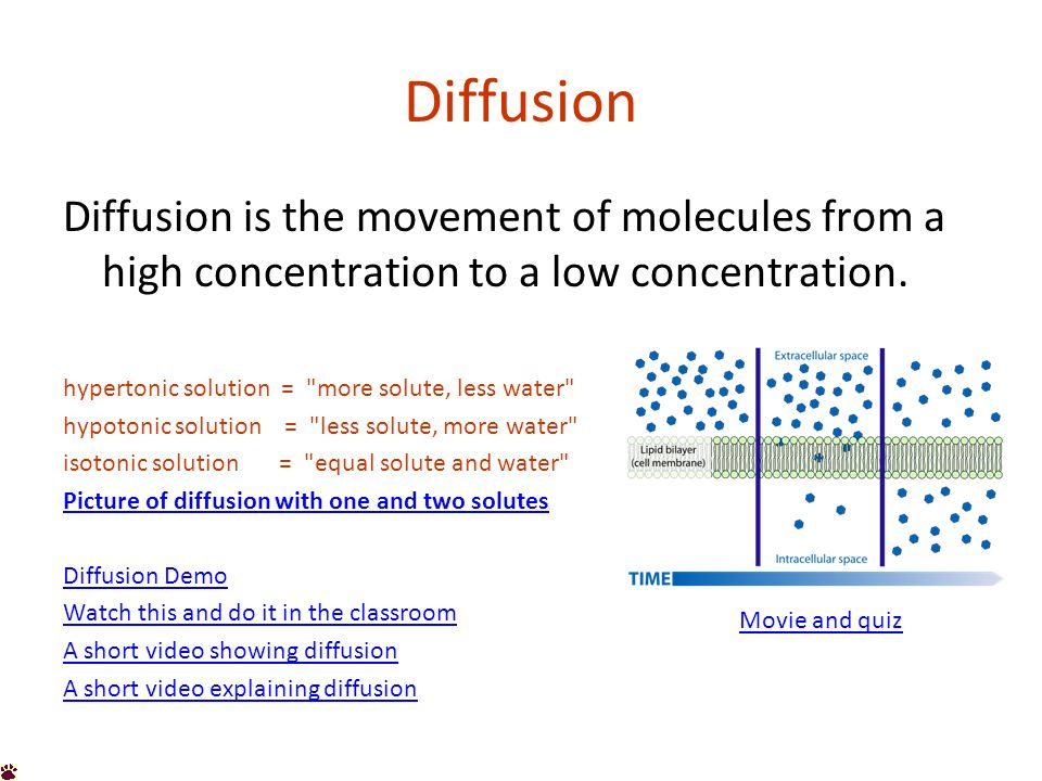 Diffusion Diffusion is the movement of molecules from a high concentration to a low concentration.