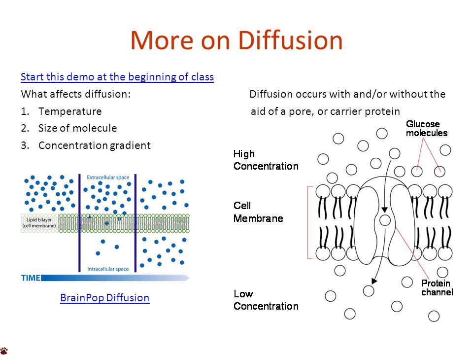 Osmosis Osmosis is a special type of diffusion.