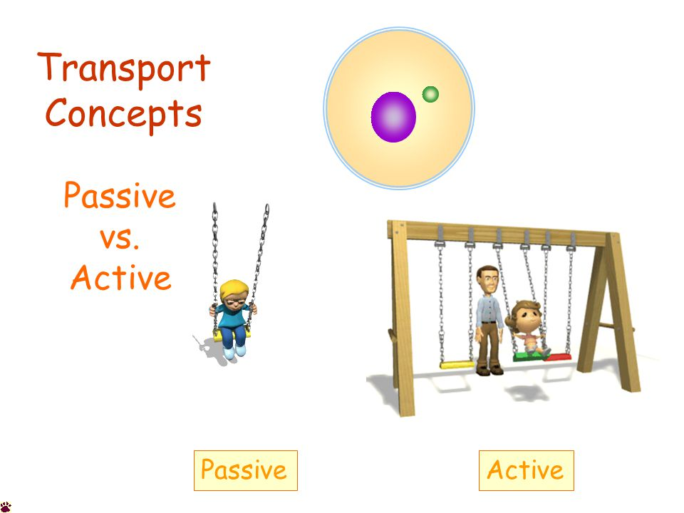 Transport Concepts Passive vs. Active PassiveActive