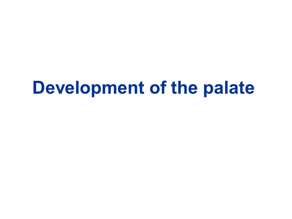 Development of the palate