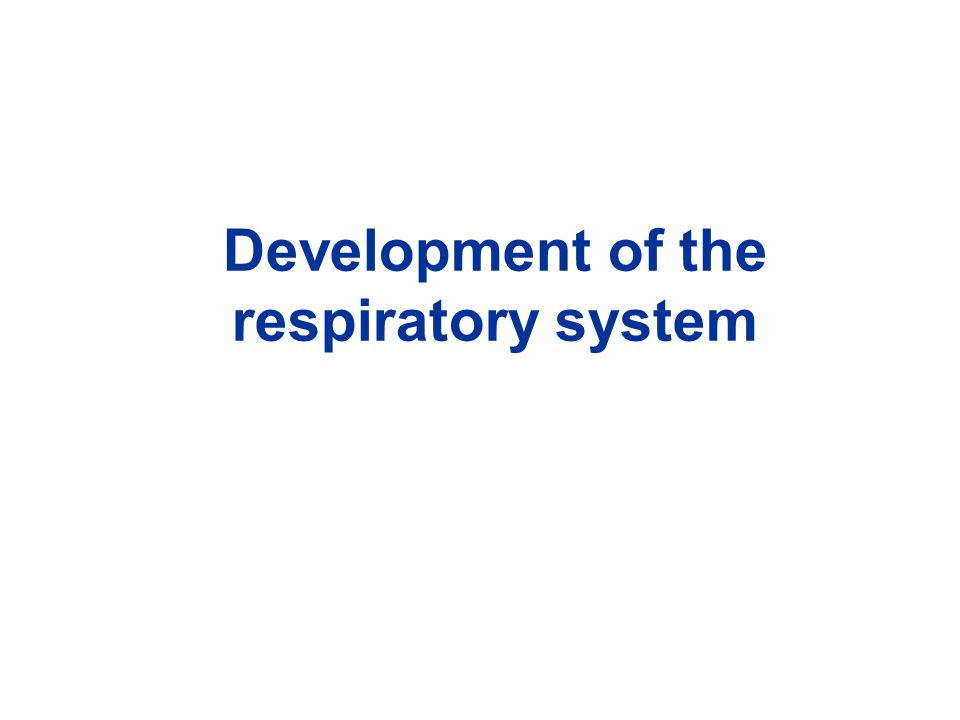 Development of the respiratory system