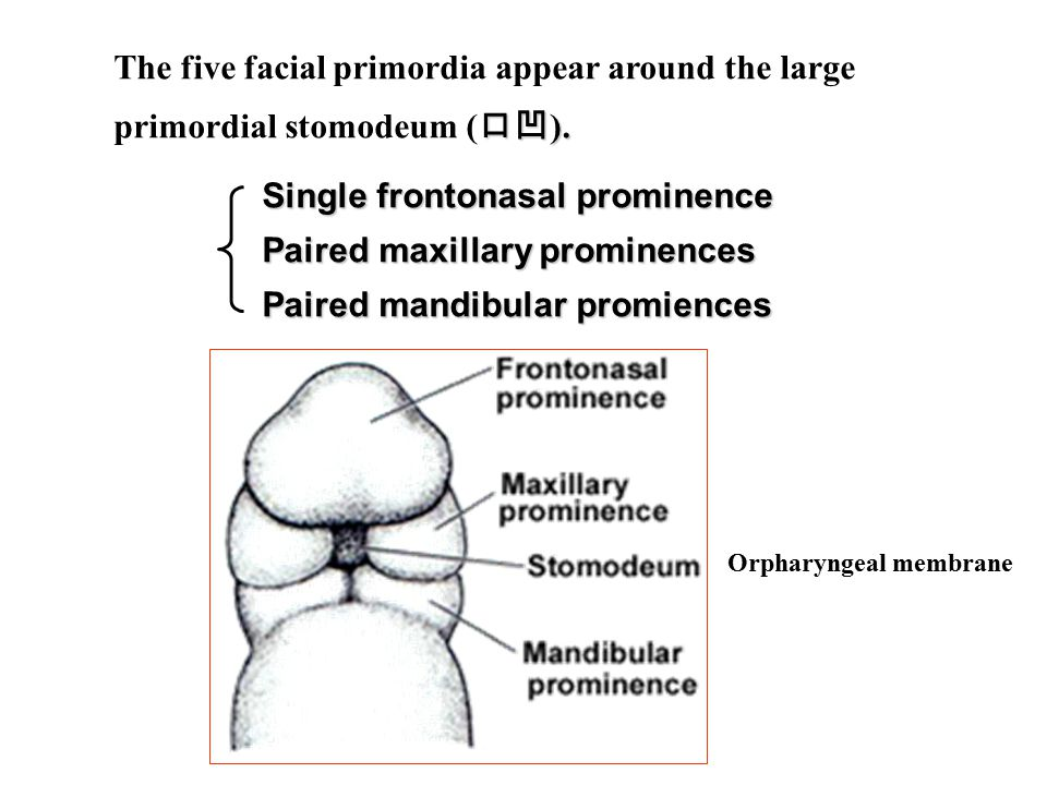 tracheoesophageal fistula( 气管食管瘘 ) Results from incomplete division of the foregut into respiratory and esophageal parts.