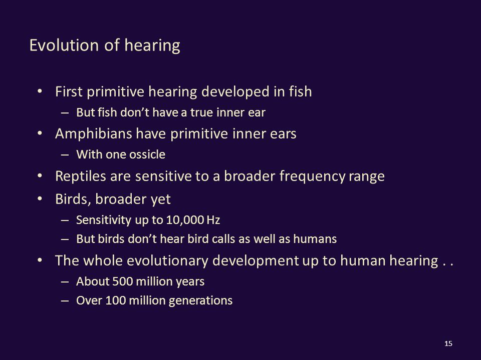 Evolution of hearing First primitive hearing developed in fish – But fish don't have a true inner ear Amphibians have primitive inner ears – With one ossicle Reptiles are sensitive to a broader frequency range Birds, broader yet – Sensitivity up to 10,000 Hz – But birds don't hear bird calls as well as humans The whole evolutionary development up to human hearing..