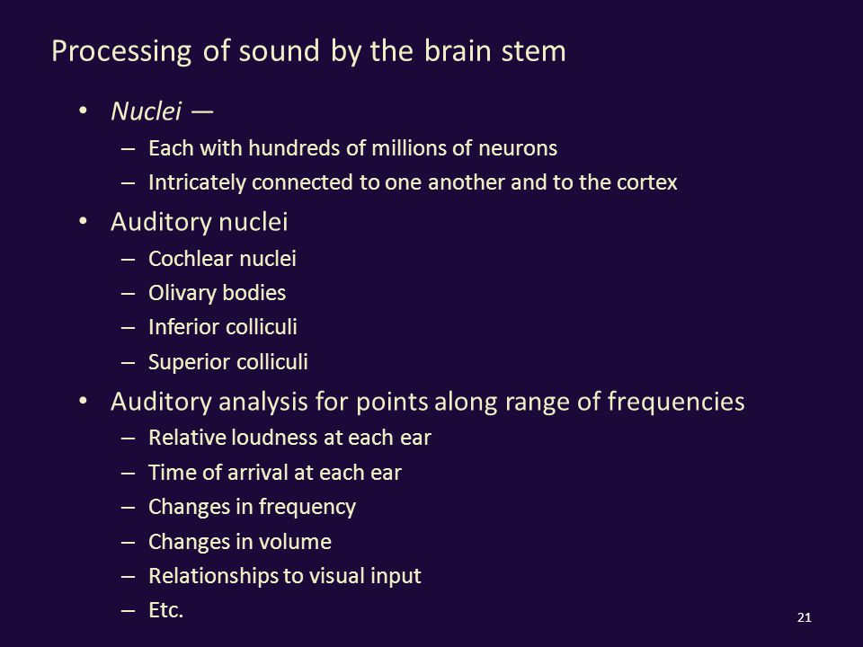 Processing of sound by the brain stem Nuclei — – Each with hundreds of millions of neurons – Intricately connected to one another and to the cortex Auditory nuclei – Cochlear nuclei – Olivary bodies – Inferior colliculi – Superior colliculi Auditory analysis for points along range of frequencies – Relative loudness at each ear – Time of arrival at each ear – Changes in frequency – Changes in volume – Relationships to visual input – Etc.