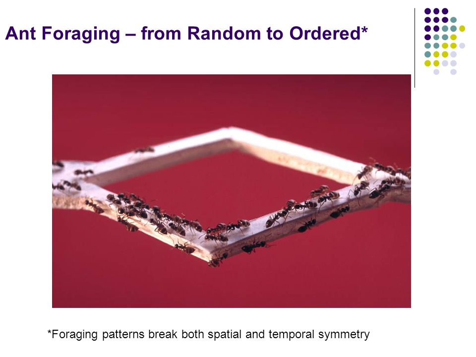 Ant Foraging – from Random to Ordered* *Foraging patterns break both spatial and temporal symmetry