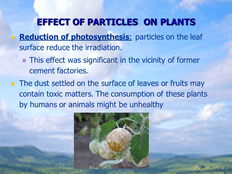 EFFECT OF PARTICLES ON PLANTS Reduction of photosynthesis: particles on the leaf surface reduce the irradiation. This effect was significant in the vi