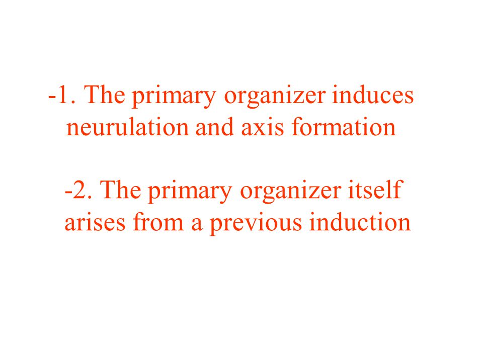 -1. The primary organizer induces neurulation and axis formation -2.
