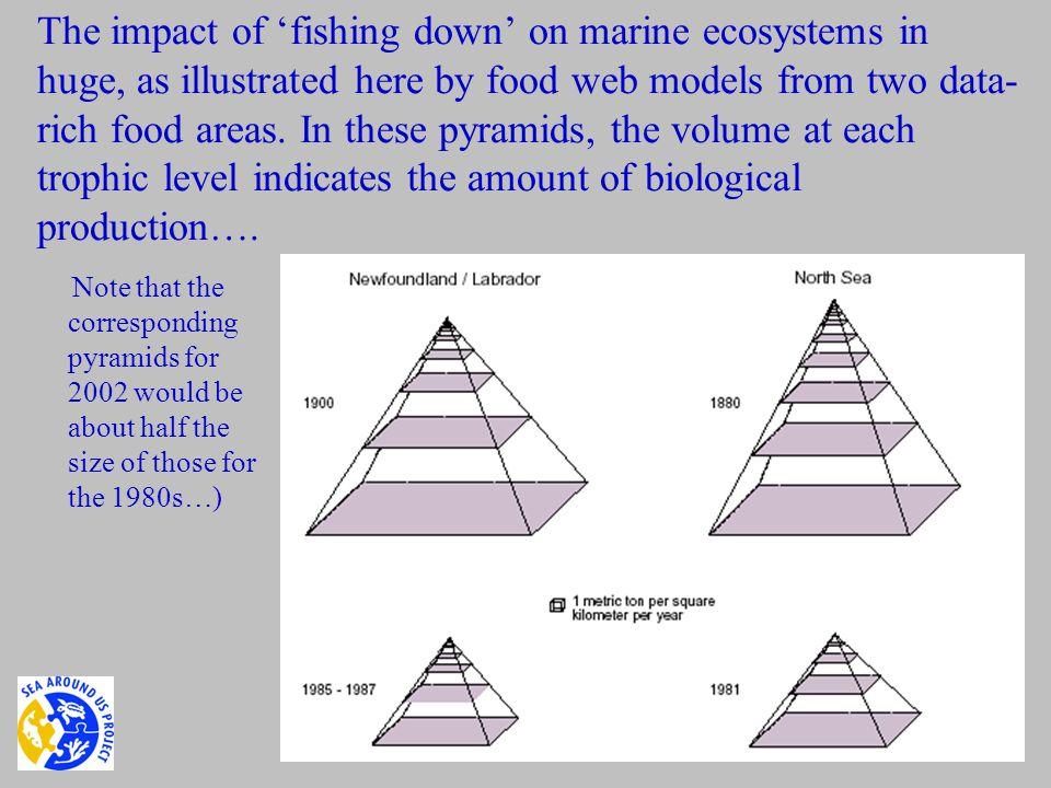 The impact of 'fishing down' on marine ecosystems in huge, as illustrated here by food web models from two data- rich food areas.