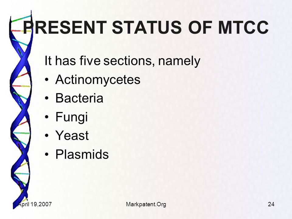 April 19,2007Markpatent.Org24 PRESENT STATUS OF MTCC It has five sections, namely Actinomycetes Bacteria Fungi Yeast Plasmids