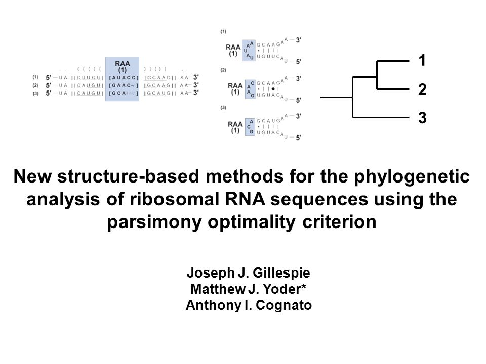 New structure-based methods for the phylogenetic analysis of ribosomal RNA sequences using the parsimony optimality criterion Joseph J.