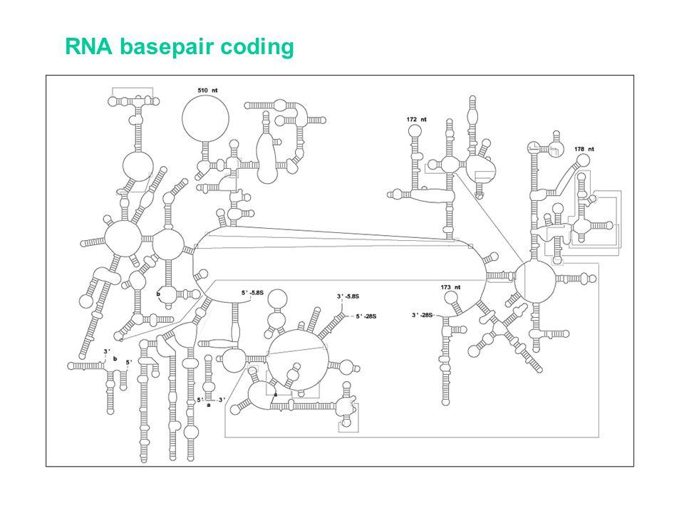 RNA basepair coding