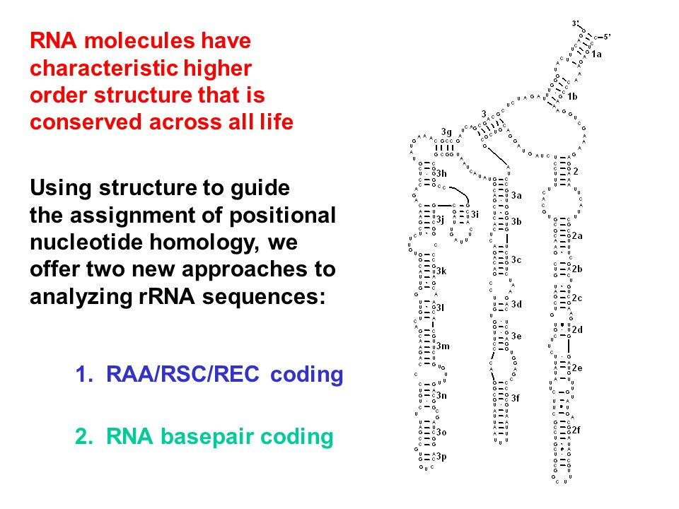 1. RAA/RSC/REC coding 2. RNA basepair coding RNA molecules have characteristic higher order structure that is conserved across all life Using structur
