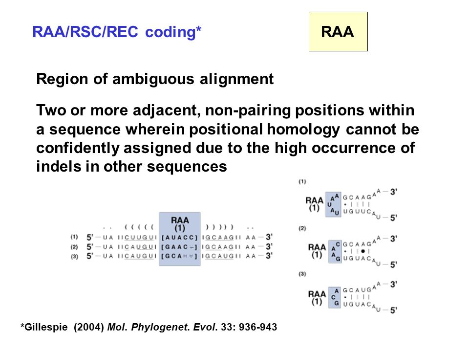 RAA/RSC/REC coding* Region of ambiguous alignment Two or more adjacent, non-pairing positions within a sequence wherein positional homology cannot be