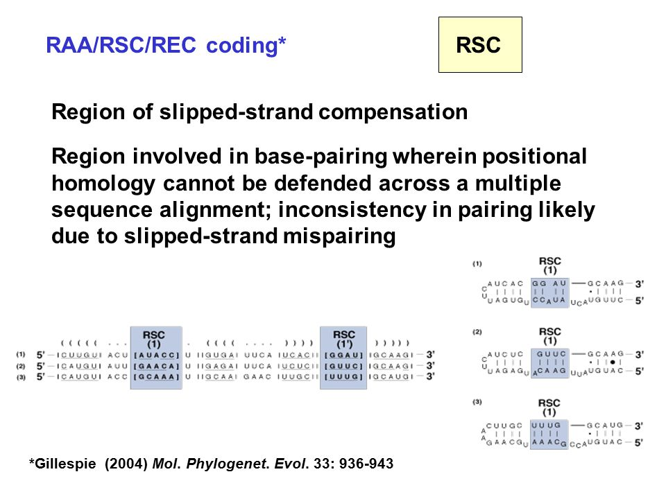 RAA/RSC/REC coding* Region of slipped-strand compensation Region involved in base-pairing wherein positional homology cannot be defended across a multiple sequence alignment; inconsistency in pairing likely due to slipped-strand mispairing RSC *Gillespie (2004) Mol.