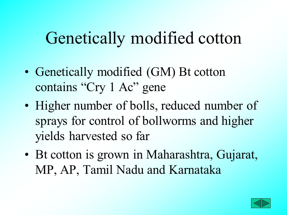 "Genetically modified cotton Genetically modified (GM) Bt cotton contains ""Cry 1 Ac"" gene Higher number of bolls, reduced number of sprays for control"