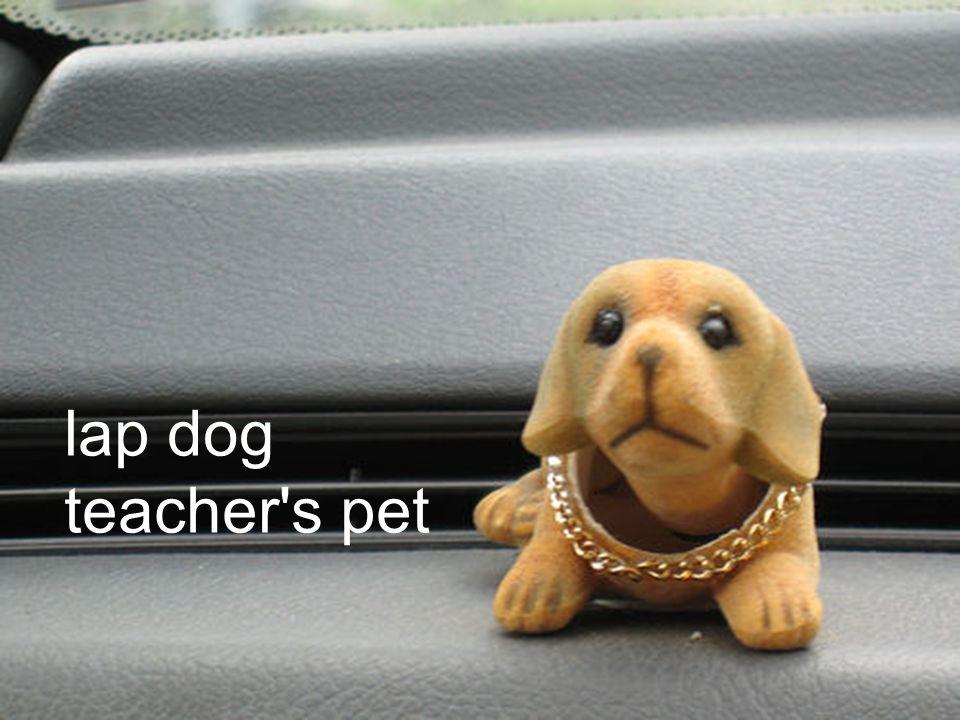 lap dog teacher s pet