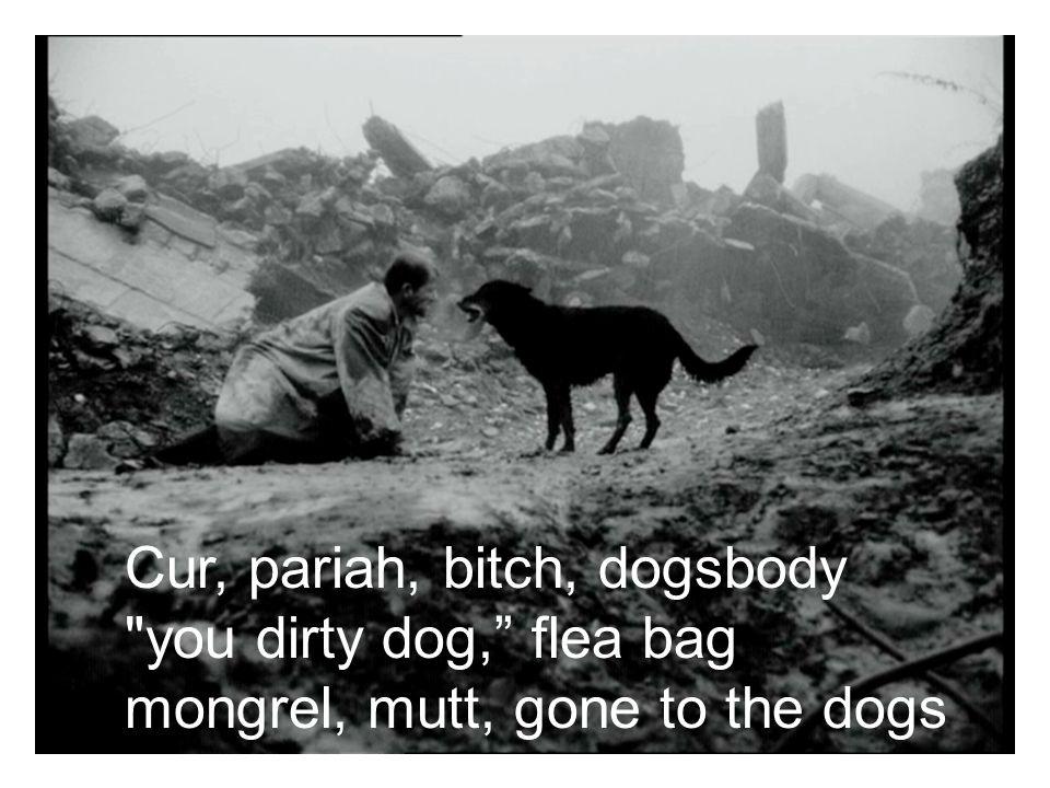 Cur, pariah, bitch, dogsbody