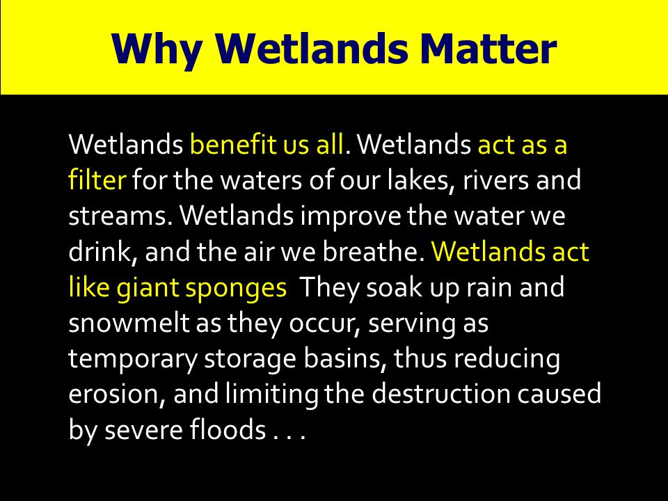 Wetlands benefit us all. Wetlands act as a filter for the waters of our lakes, rivers and streams. Wetlands improve the water we drink, and the air we
