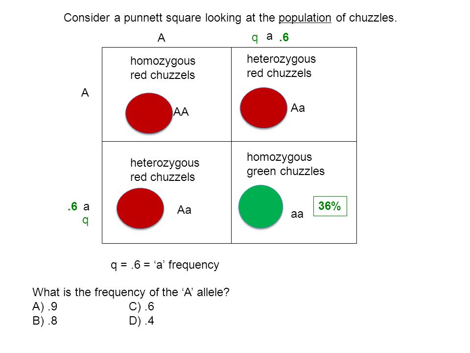 Consider a punnett square looking at the population of chuzzles.