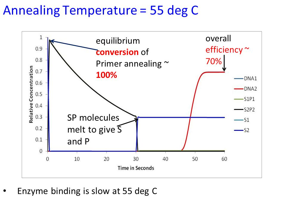 Annealing Temperature = 55 deg C equilibrium conversion of Primer annealing ~ 100% overall efficiency ~ 70% SP molecules melt to give S and P Enzyme binding is slow at 55 deg C